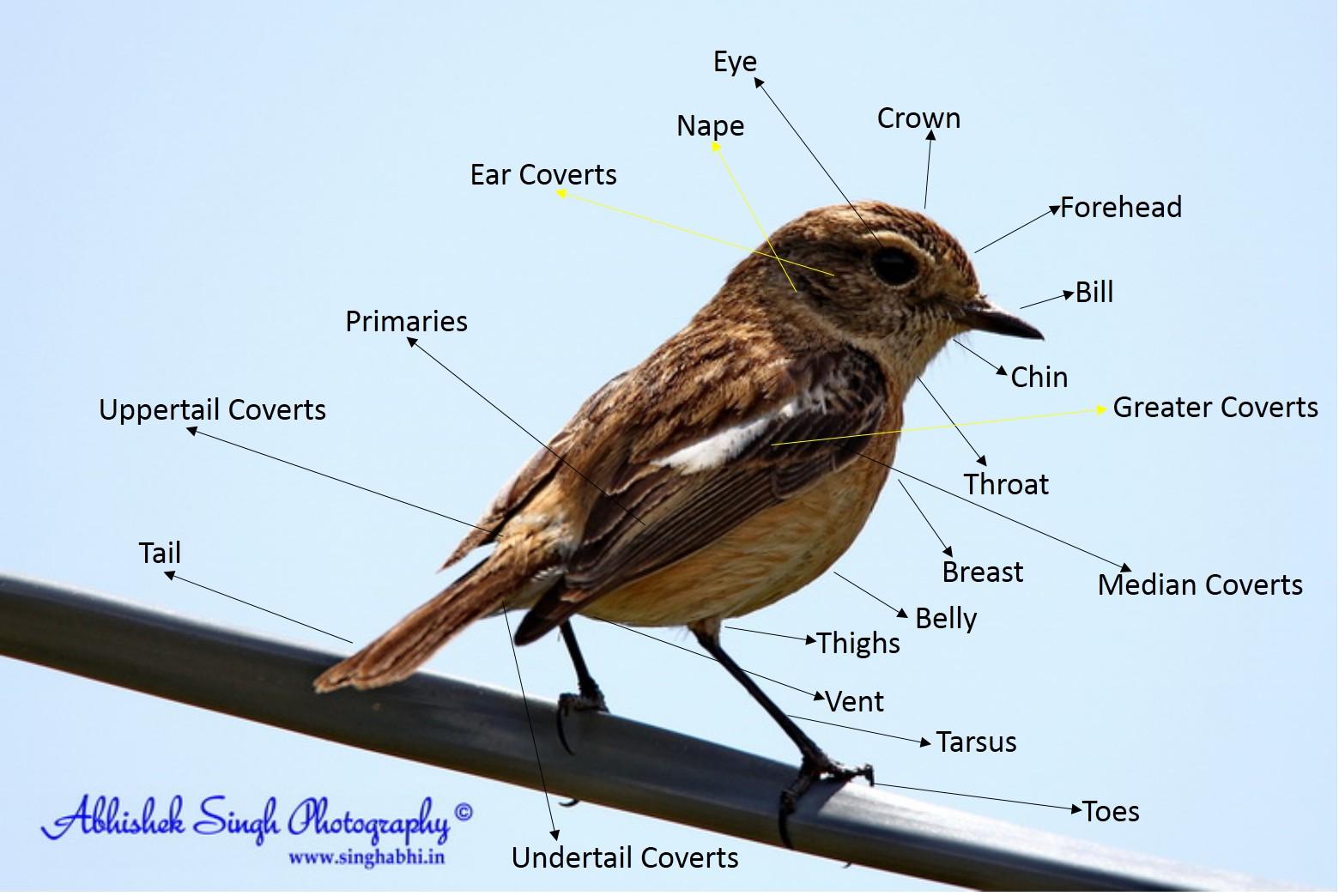 Bird Body Parts : About birds abhishek singh photographyabhishek